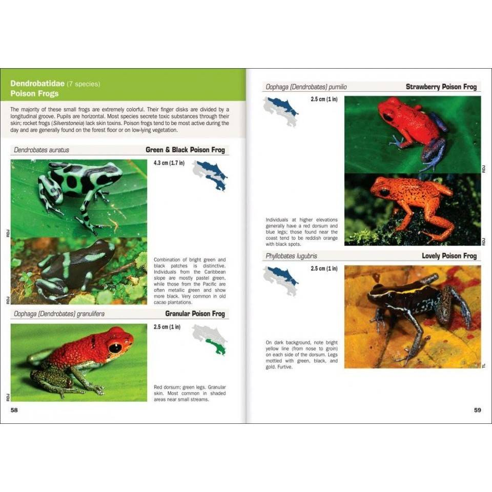 Amphibians and Reptiles of Costa Rica