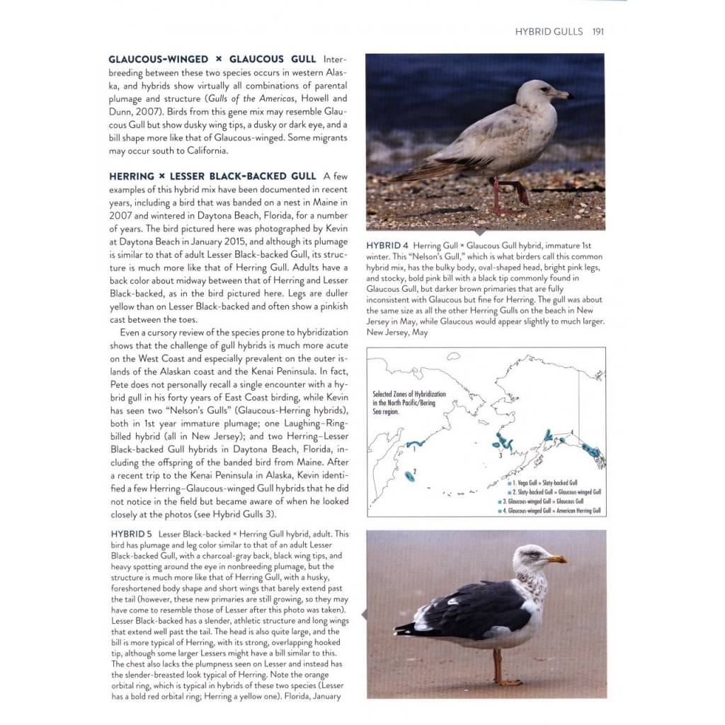 Gulls Simplified A Comparative Approach to Identification
