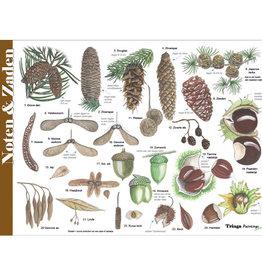Tringa Paintings Herkenningskaart Noten, Zaden en Vruchten