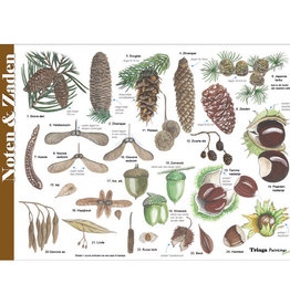 Tringa Paintings Nuts, Seeds and Fruits recognition card