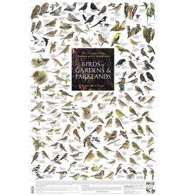 Korck Tuin- en parkvogels Poster