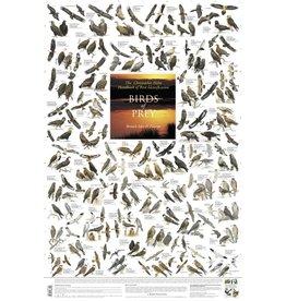 Korck Roofvogel Poster