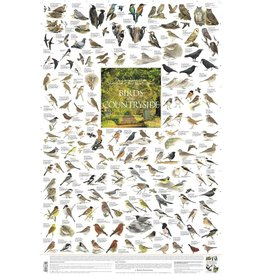 Korck Birds of the Countryside Poster