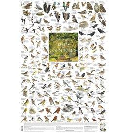 Korck Vogels  van het Platteland Poster