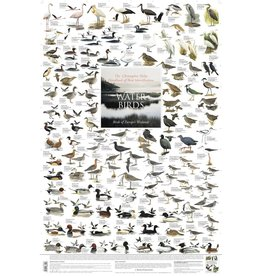 Korck Water Birds Poster