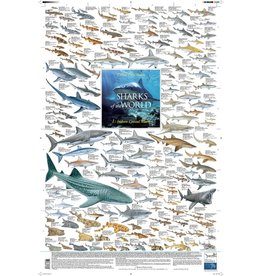Korck Sharks of the World, 1: Inshore Coastal Waters Poster