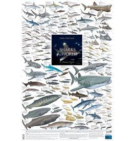 Korck Sharks of the World, 3: Oceanic Depths Poster