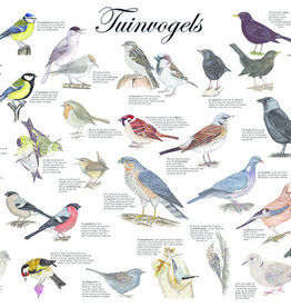 Tringa Paintings Garden bird poster