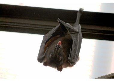 Welke Bat Detector heb ik nodig?