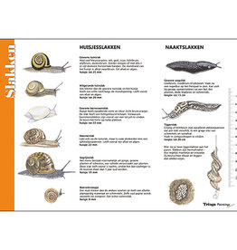 Tringa Paintings recognition card Snails