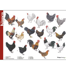 Tringa Paintings recognition card Chickens