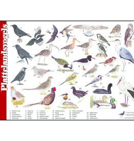 Tringa Paintings Herkenningskaart Plattelandsvogels