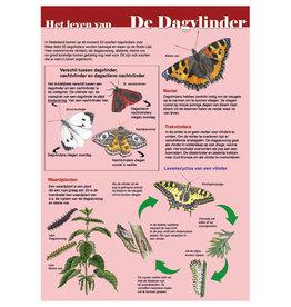 Tringa Paintings Edukaart Het Leven van de Dagvlinder