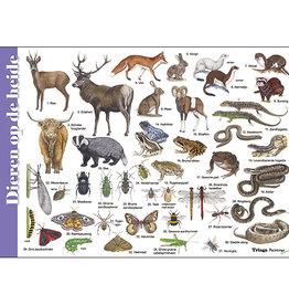 Tringa Paintings Herkenningskaart Dieren op de heide
