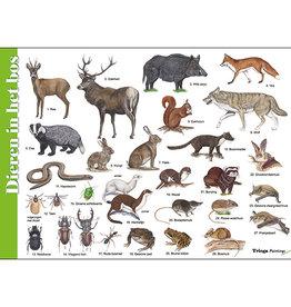Tringa Paintings Herkenningskaart Dieren in het bos