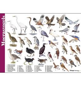 Tringa Paintings Herkenningskaart Moerasvogels