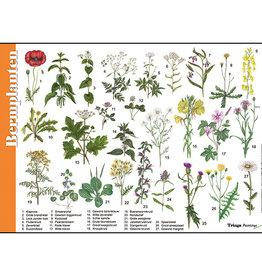 Tringa Paintings Herkenningskaart Bermplanten