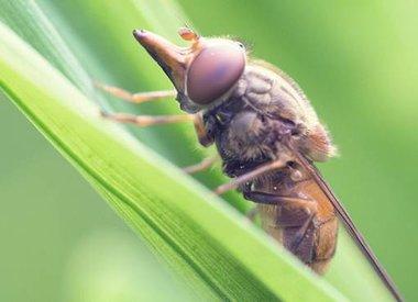Entomologie - Insecten