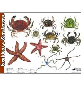 Tringa Paintings Herkenningskaart Krabben en Zeesterren