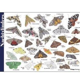 Tringa Paintings Herkenningskaart Nachtvlinders