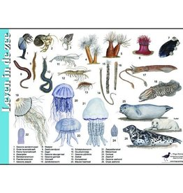 Tringa Paintings Herkenningskaart Leven in de zee
