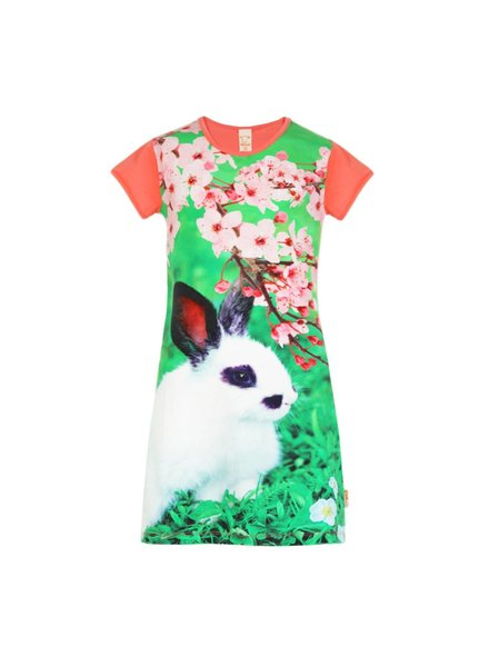 dress Mini rabbit