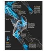 FOCUS-GESUNDHEIT FOCUS Gesundheit - Die neuen Strategien für gesunde Knochen und Gelenke