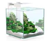 Nano aquarium (10-40 liter)
