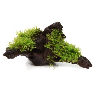 Tropica Driftwood with Christmas moss