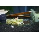 Onlineaquarium spullen Feeding dish nano