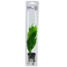 Tropica Echinodorus 'Bleherae' - In pot
