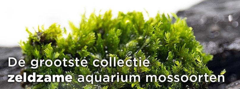 De grootste collectie  zeldzame aquarium mossoorten
