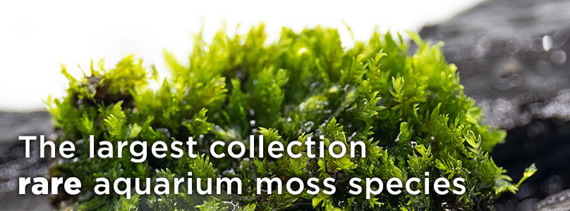 The largest collection rare aquarium moss species