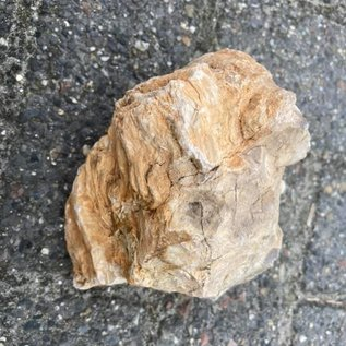 Fossil Wood stone