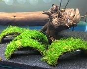 Cocosnoot met plant/mos