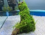 Aquarium plants on wood