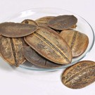 Onlineaquarium spullen Coco para blad 10-18cm