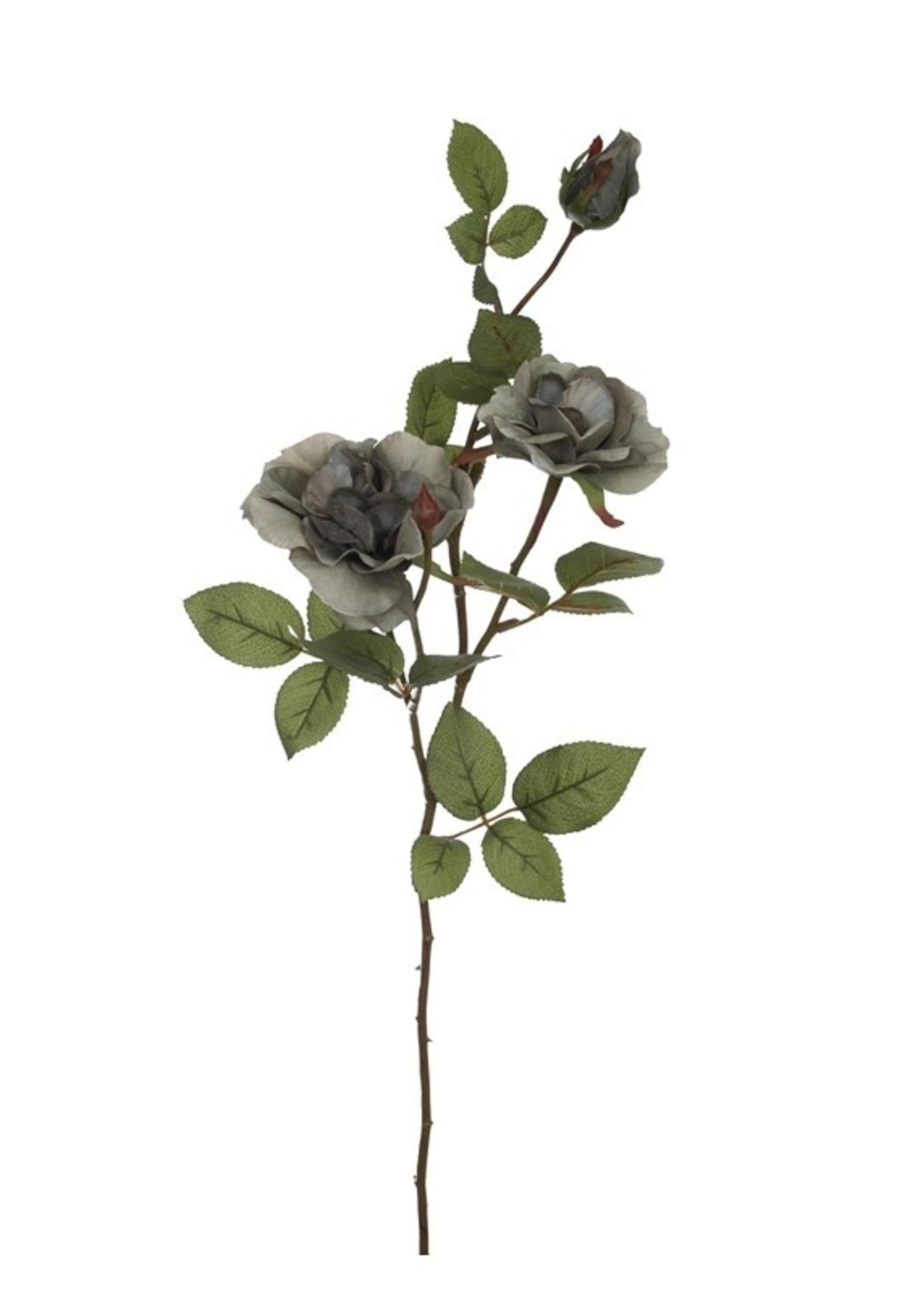 Roos grey