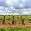 Popov Winery Vranec Smolnik - Tikvesh, Noord-Macedonië