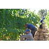 Cinquenoci Primitivo I.G.P. Tagaro - Puglia, Italië
