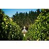 Sauvignon Blanc 'Le Petit Clos' 2018 Clos Henri BIO - Marlborough, Nieuw-Zeeland