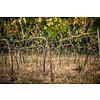 1-fles wijngeschenk Cantine Menhir N. Zero Negroamaro - Puglia, Italië