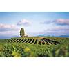 Nr. 22 Chardonnay / Viognier Réserve The Finest Grapes - Pays d'Oc, Frankrijk