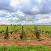 Popov Winery Merlot Grand Reserve - Tikvesh, Macedonië