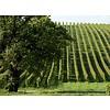 2-fles wijnkist met Château Baracan - Côtes de Bordeaux, Frankrijk