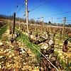 Cuvée Margot 2015 Olivier Leflaive Grand Vin de Bourgogne - Bourgogne, Frankrijk