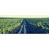 Salcuta Pinot Gris Blush rosé Winemaker's Way - Stefan Voda, Moldavië
