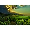 Nr. 19 Colombard / Gros Manseng The Finest Grapes - Côtes de Gascogne, Frankrijk