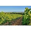 Nr. 62 Pays D'Oc The Finest Grapes - Vin de Pays de l'Hérault, Frankrijk