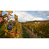 Venec Winery Vranec - Tikvesh, Noord-Macedonië